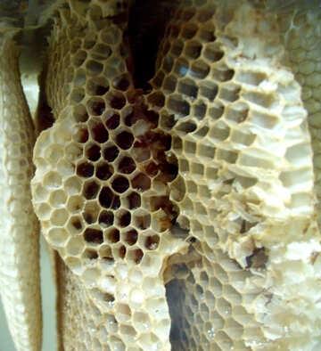 Honeycomb №21385