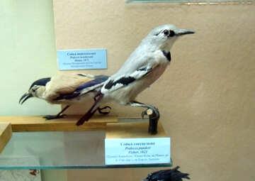 Jay bird effigy №21295