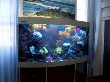 Marine Aquarium №21432