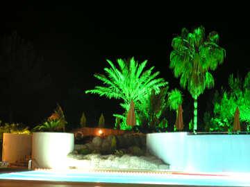 Palme in piscina di notte №21112