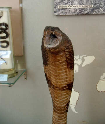 Stuffed cobra №21316