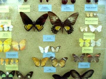 Farfalle sotto vetro №21383