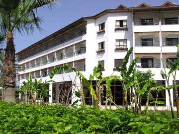 Bananen und Palmen Bäume in der Landschaftsplanung №21664