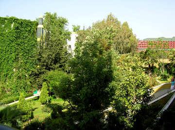 Bäume in der Landschaft-Design des Hotels №21761