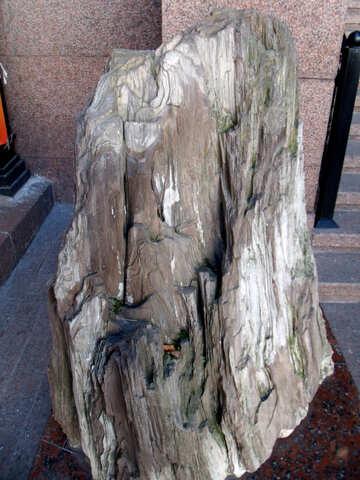 Petrified wood №21494