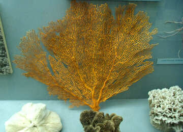 Branch coral №21404