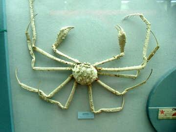 Crab №21390