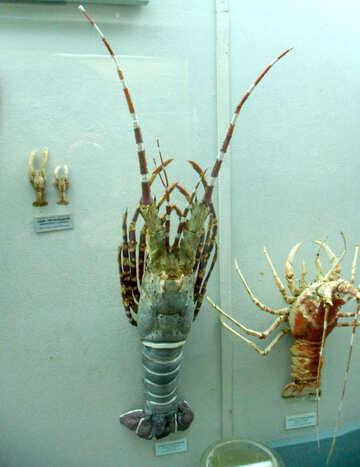 Lobsters №21395