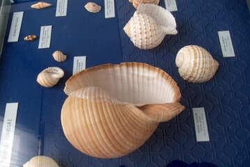 Souvenir from the beach №21352