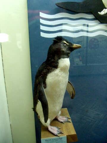 Bird stuffed penguin №21279