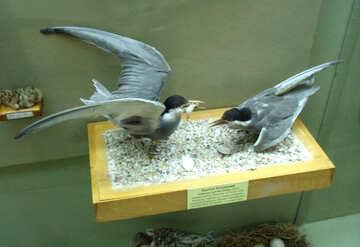 Stuffed birds seagulls №21303