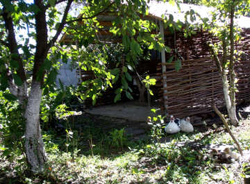 Duck sitting in the shade №21510