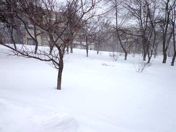 Park covered with snow №21546