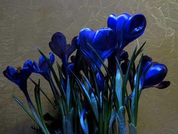 Violet snowdrops №21259