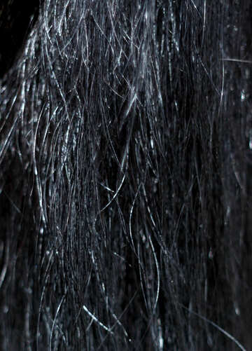 The texture of horsehair №21886