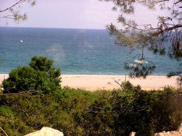 Foresta sul mare №21163