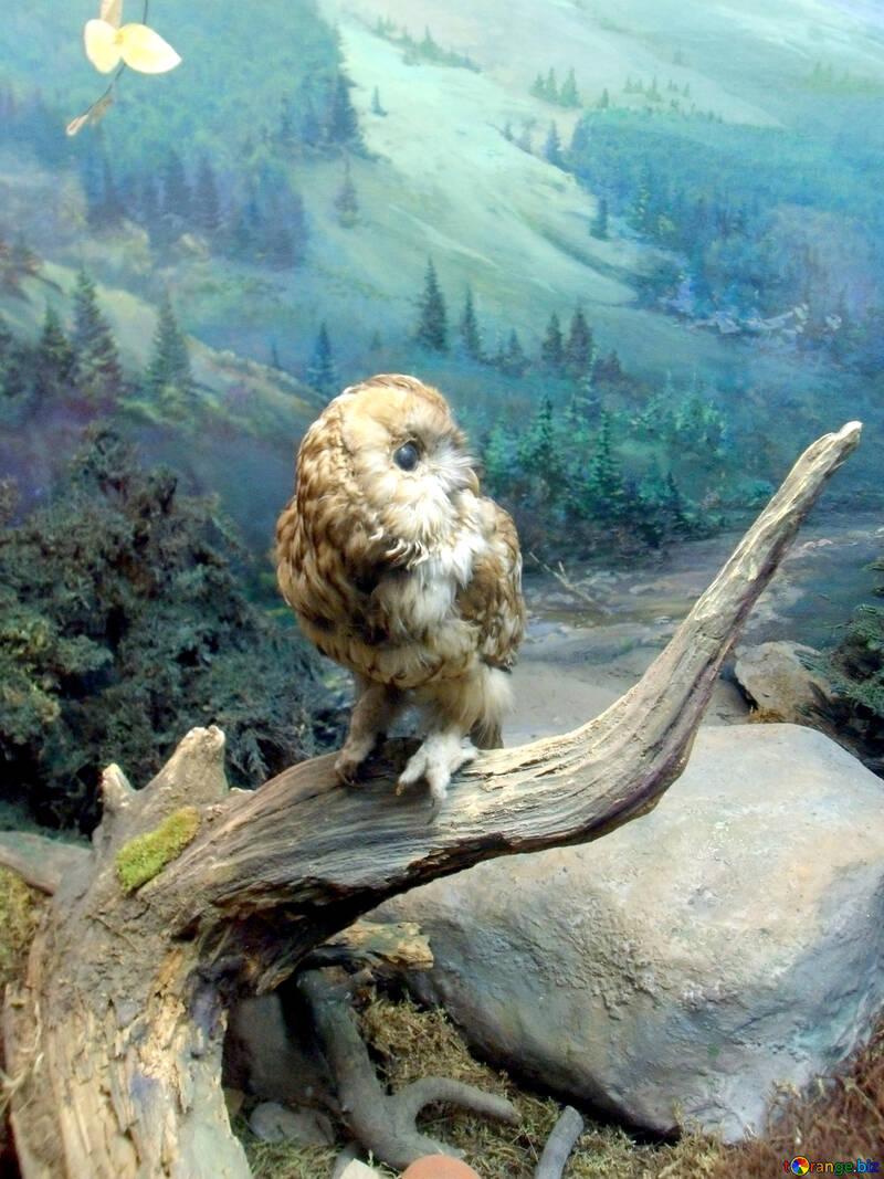 A stuffed bird of prey №21293