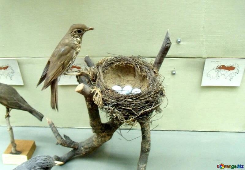 Stuffed bird on the nest №21289
