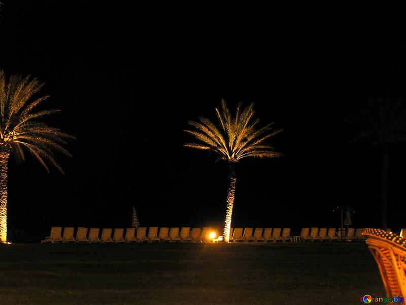 Night tree №21108