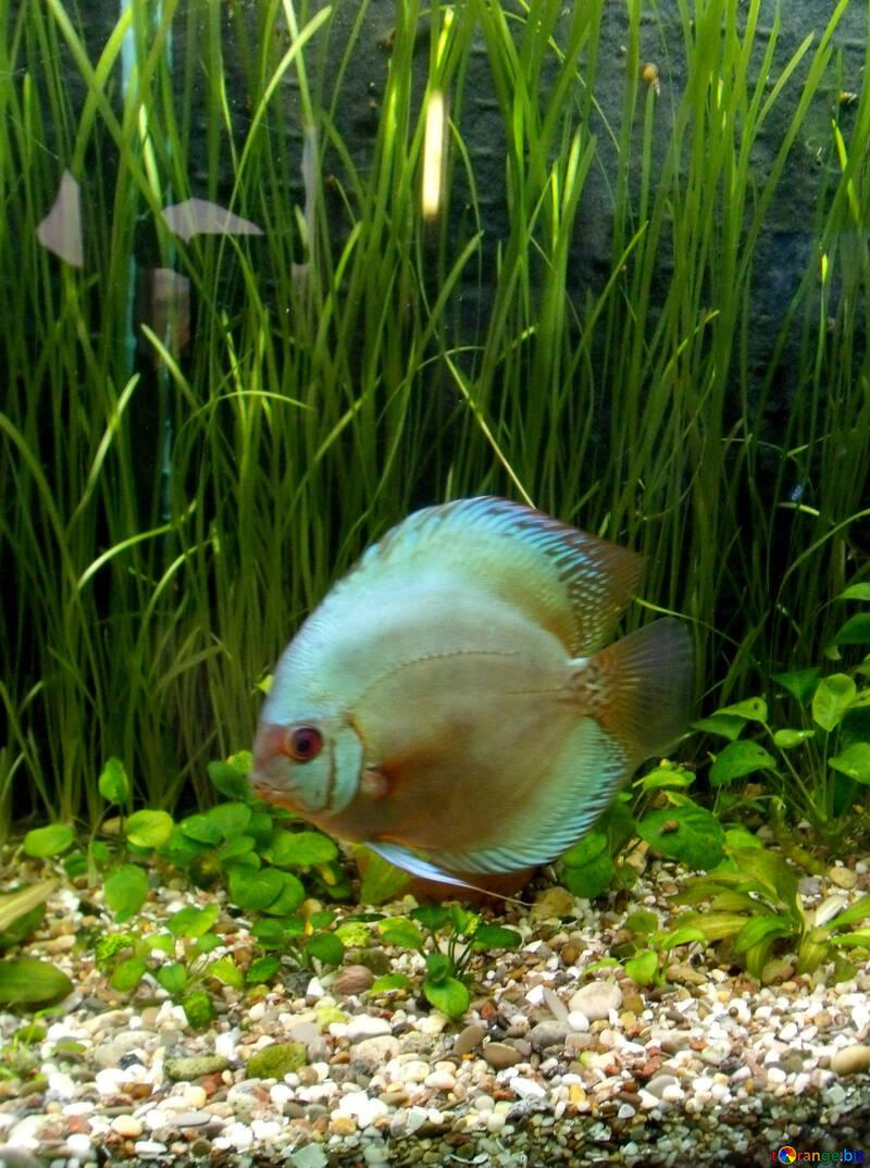 Big fish in an aquarium №21437