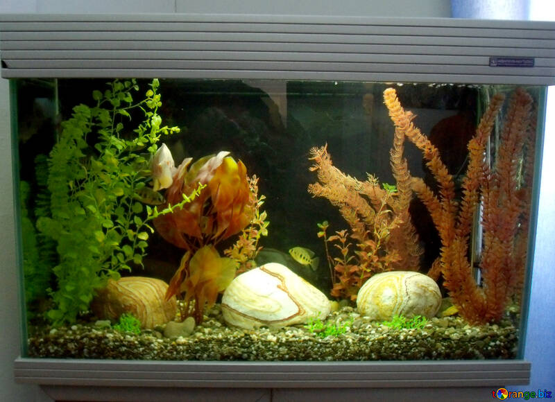 aquarium fish home aquarium fish 21435