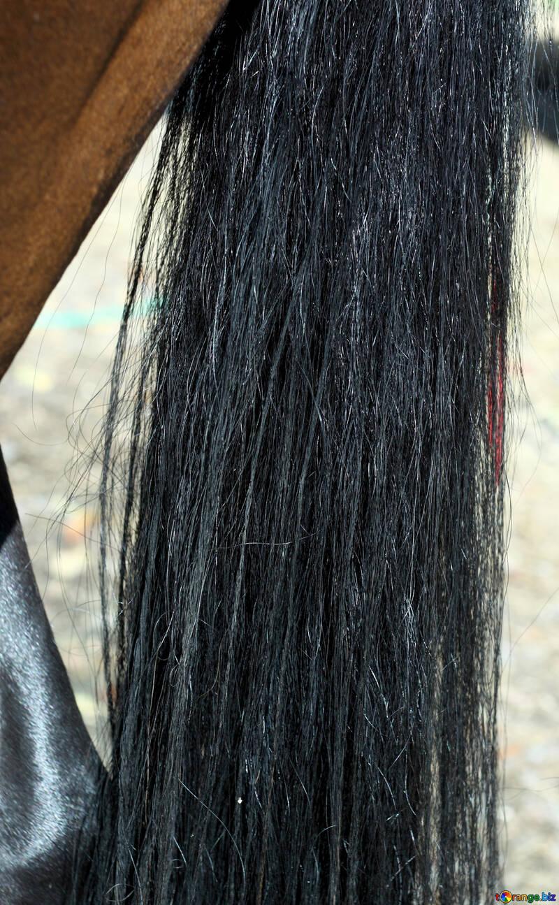 Queue de cheval №21882