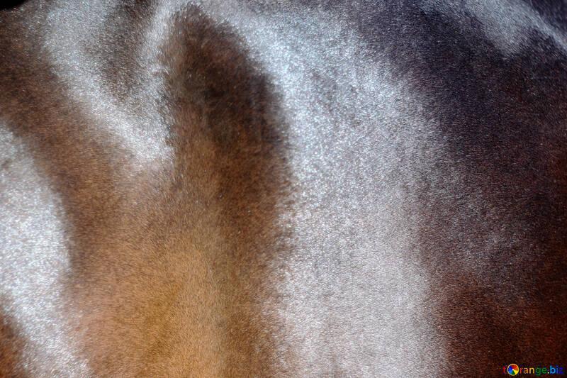 Horse hair texture №21890