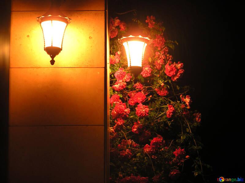 Abend Lichter №21106