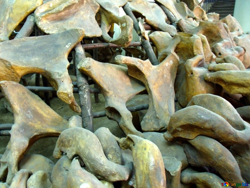 House of animal bones №21484