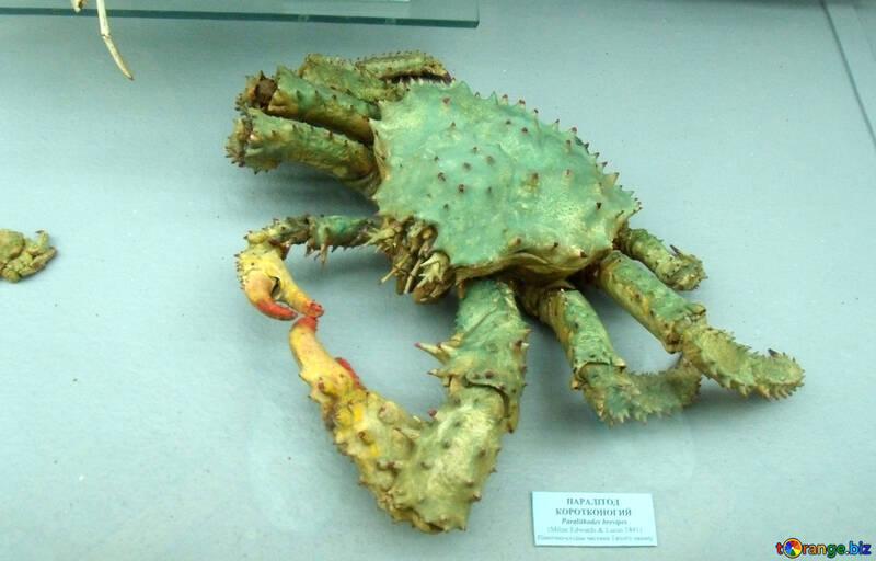 Crab №21393