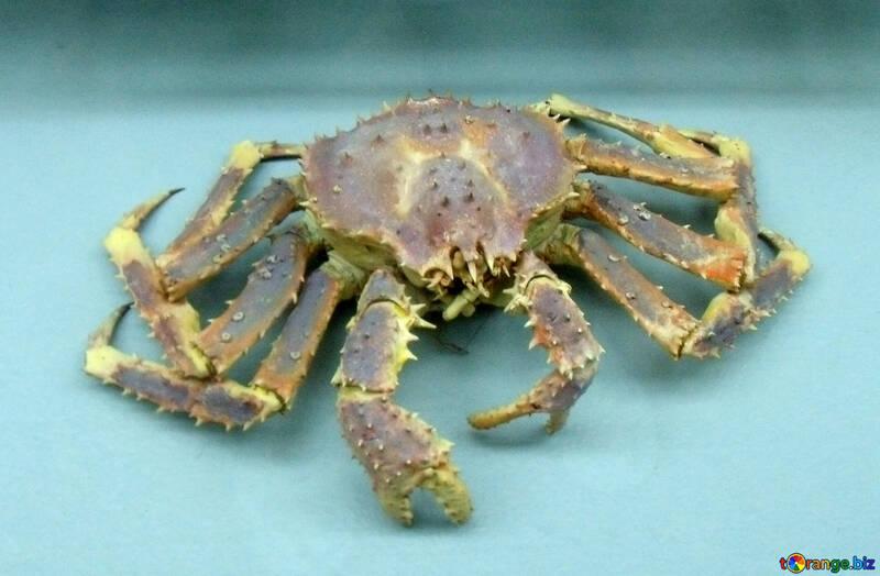 Crab №21396