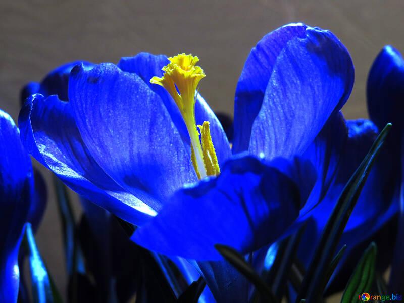 Flor de primavera №21255