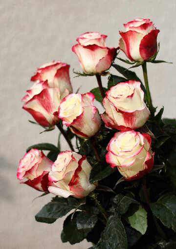 Bouquet di Rose №22787