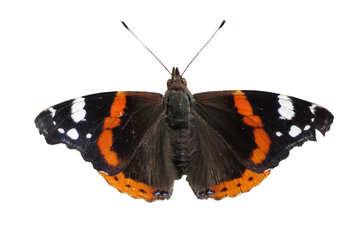 Butterfly №22251