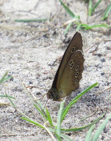 Butterfly №22254