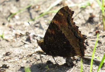 Butterfly №22256