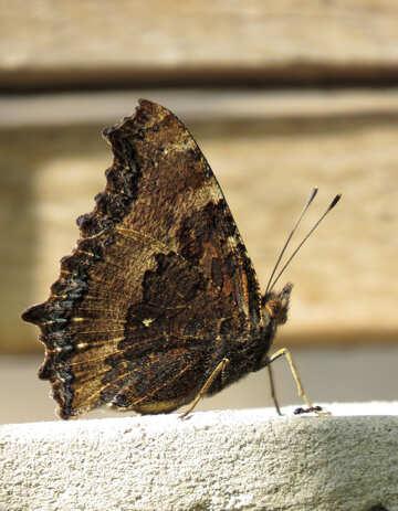 Butterfly №22280