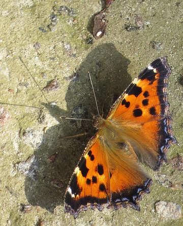 Butterfly №22285