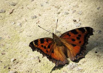 Beautiful butterfly №22269