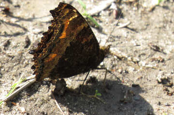 Butterfly on the ground №22259