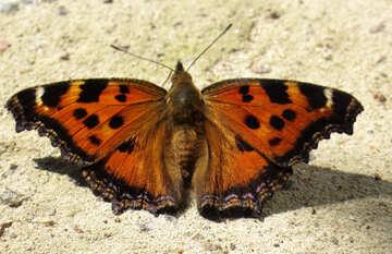Orange Butterfly №22267