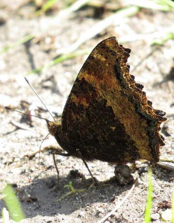 Silhouette butterfly №22258