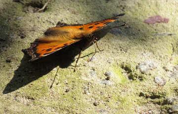 Butterfly in the sun №22276