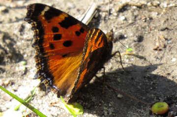 Butterfly walk №22261