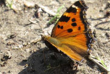 Butterfly Wings №22260