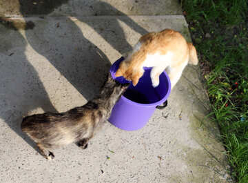 Cat in bucket №22412
