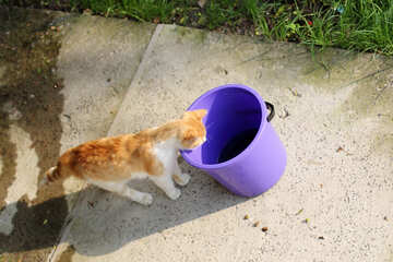 Cat looks at the bucket №22424