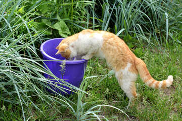 Cat steals fish from bucket №22429