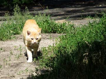 Cat №22408