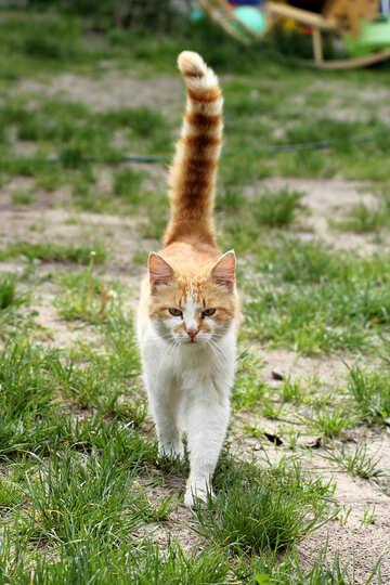 Cat №22435